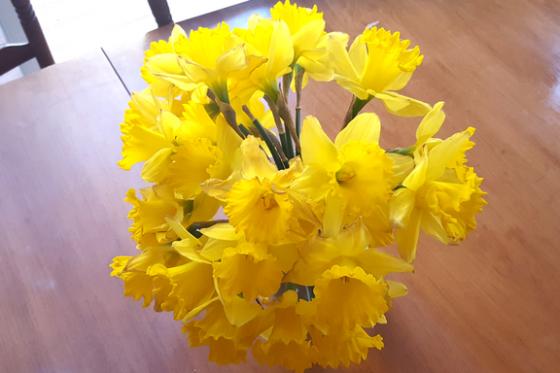 Daffodils Blog